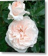 Pink Roses Love And Passion Metal Print