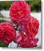 Pink Roses White Picket Fence Metal Print