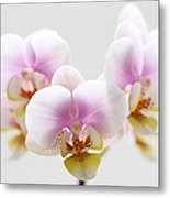 Pink Sensation Metal Print by Juergen Roth