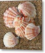 Pink Shells Metal Print