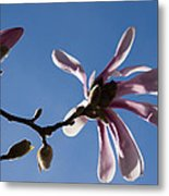 Pink Spring - Blue Sky And Magnolia Blossoms Metal Print