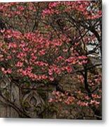 Pink Spring - Dogwood Filigree And Lace Metal Print by Georgia Mizuleva