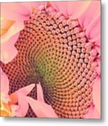 Pink Sunflower Metal Print