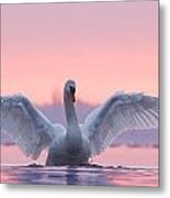 Pink Swan Metal Print