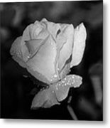 Pink Tea Rose 02 - Infrared Metal Print