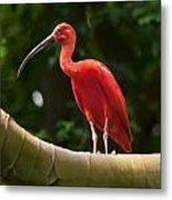 Pink Tropical Bird Metal Print