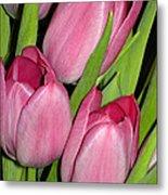 Pink Tulip Metal Print