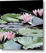 Pink Water Lilies Painting Metal Print