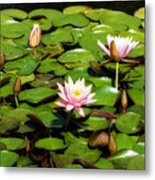 Pink Water Lilies Soft Focus Metal Print
