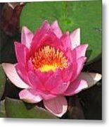Pink Water Lilly Metal Print