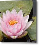 Pink Water Lily And Leaves Metal Print