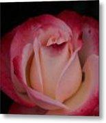 Pink White Rose Metal Print