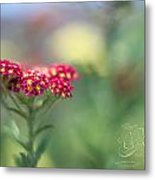 Pink Wildflower Metal Print