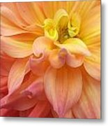 Pink Yellow Centre Metal Print