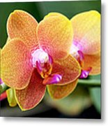 Pink Yellow Orchid Metal Print