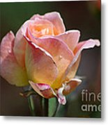 Pink Yellow Rose 01 Metal Print