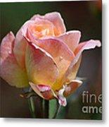 Pink Yellow Rose 01 Metal Print