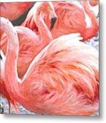 Pinked Flamingos Metal Print