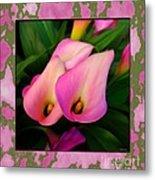 Pinkish Calla Lily Blooms Metal Print