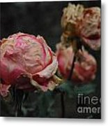 Pink Roses In The First Snow I V Metal Print