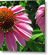 Pinks Metal Print