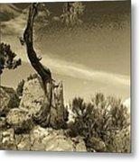 Pinon Pine Metal Print