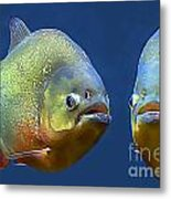 Piranha Ready For Lunch Metal Print