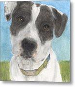 Pitbull Dog Portrait Canine Animal Cathy Peek Metal Print