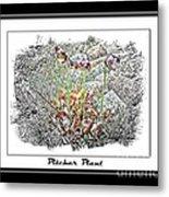 Pitcher Plant Illustration Metal Print
