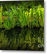 Pitcher Plant Paradise Metal Print by Mike Nellums