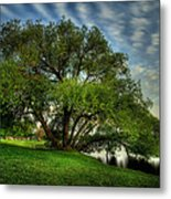 Pithers Willow Metal Print