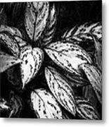 Plant 8659 Metal Print