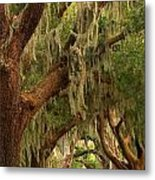 Plantation Oak Trees Metal Print