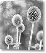 Plants In The Rain Metal Print