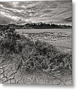 Plants On The Alvord Desert Metal Print