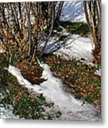 Plantsgrasscomp 2009 Metal Print