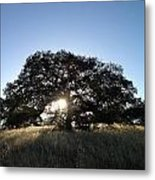 Plateau Oak Tree Metal Print