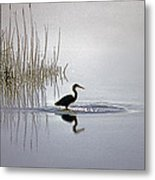 Platinum Heron Metal Print by Skip Willits