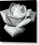 Platinum Rose Flower Metal Print