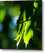 Play Of Light On Maple Leaves Metal Print