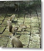 Green Monkey Play Time Metal Print