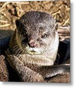 Play Time For Otters Metal Print