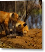 Play Time Metal Print by Thomas Young