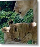 Playful Cubs Metal Print