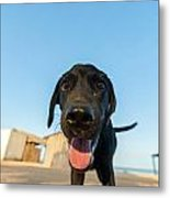 Playful Dog Closeup Metal Print