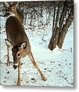 Playful In The Snow Metal Print