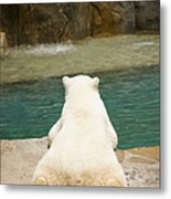 Playful Polar Bear Metal Print