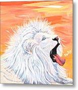 Playful White Lion Metal Print