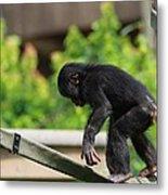 Playful Young Monkey Metal Print