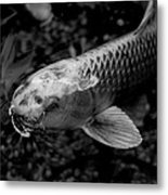 Playing Koi Metal Print